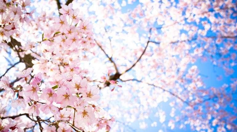 Novità di Novembre: Sakura topping