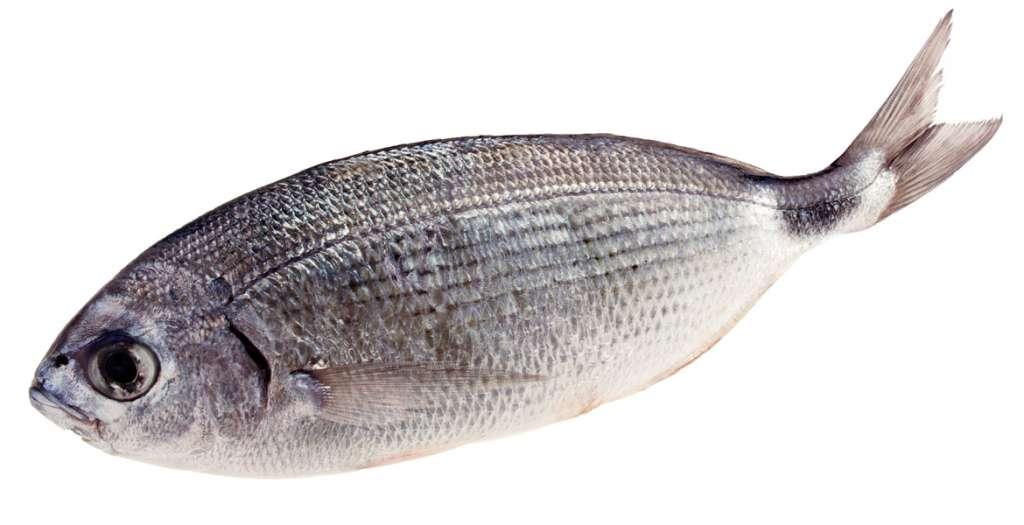pesce magro per il sushi