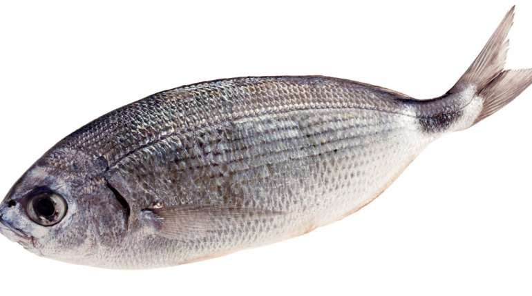 Pesce magro: qual è il più adatto a chi è a dieta?