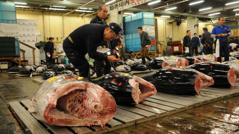 Tokyo, chiude lo storico mercato del pesce