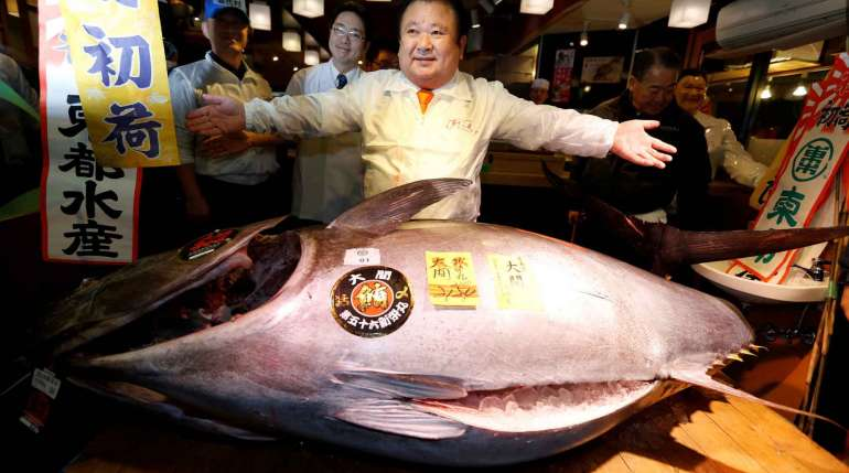 Tonno rosso, il pesce più costoso del mondo