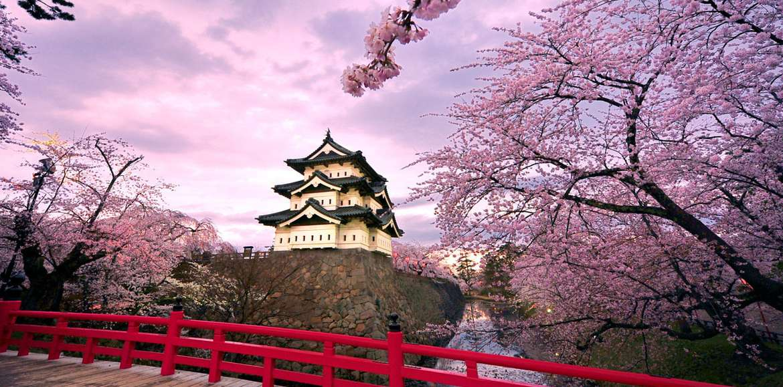 La primavera esplode in Giappone con la meravigliosa fioritura dei ciliegi